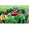 青菜果园绿色食品