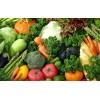 有机食品生态园监控