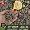 鹅卵石供应公园鹅卵石铺路鹅卵石