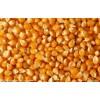 常年现款大量求购玉米,大豆,高粱,小麦,大麦