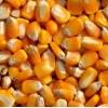 大量求购:玉米大豆高粱小麦次粉等各种饲料原料