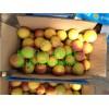 陕西丰园红杏产地行情,杏子大量上市