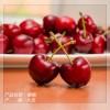 大连绿色认证大樱桃桃|大连特产樱桃|匠工农品有机樱桃