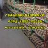 东莞热镀锌钢丝网,冷镀锌钢丝网厂家批发