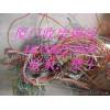 厦门废旧电缆线回收