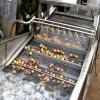 德州销售清洗机蓝莓清洗机蔬菜清洗机大型清洗剂