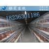 南阳哪里可以买到鸡笼丨阶梯式鸡笼丨河南银星鸡笼厂地址