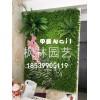 枫林塑料仿真草坪假草皮植物墙草坪地毯背景墙仿真植物墙