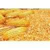 大量收购玉米,大豆,高粱,小麦,麸皮