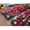 供应郑州优质的室内花卉|河南室外花卉租赁价格
