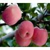 优质白水苹果价格核桃厂家电话渭南天顺农产品商贸有限公司
