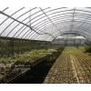 现代化多肉植物温室大棚寿光大棚价格多肉植物用遮阳设施