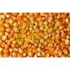 旺川求购:玉米、菜饼、麸皮、棉粕、荞麦