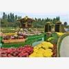 纳境园林是一家专业从事菊花造型、菊花展生产与销售的综合型企业