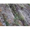 河北环形网哪个厂家的质量较好---安德森边坡防护