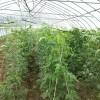 上海绿色农产品配送上海农产品配送有限公司勇沪供