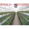 用草莓种植槽产量高吗