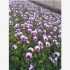 郑州大伟花卉有限公司专注郑州花卉租赁公司!令花卉租赁产品显著
