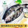 安徽三珍食品冰鲜鮰鱼厂家直销
