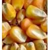 常年大量收购玉米小麦大豆高粱等饲料