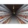 鸡笼供应厂家