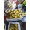 陕西黄桃批发价格,西瑞黄桃,黄金蜜毛桃,黄金蜜毛桃产地