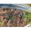 成都本地的水肥一体化节水灌溉公司四川润隆公司